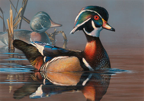Best Duck Decoys 2020 New Stamp Art for 2019 2020 and New Challenges | Friends of the
